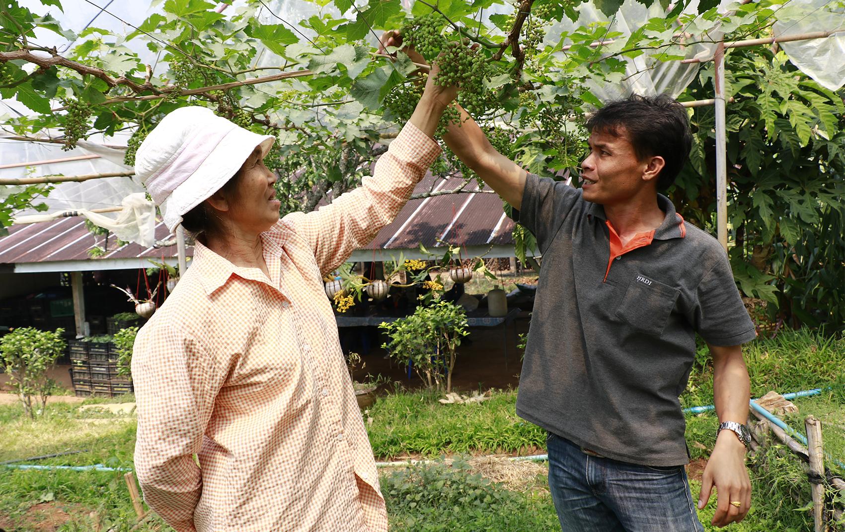 การพัฒนาเกษตรกรปราดเปรื่อง (Smart Farmer)
