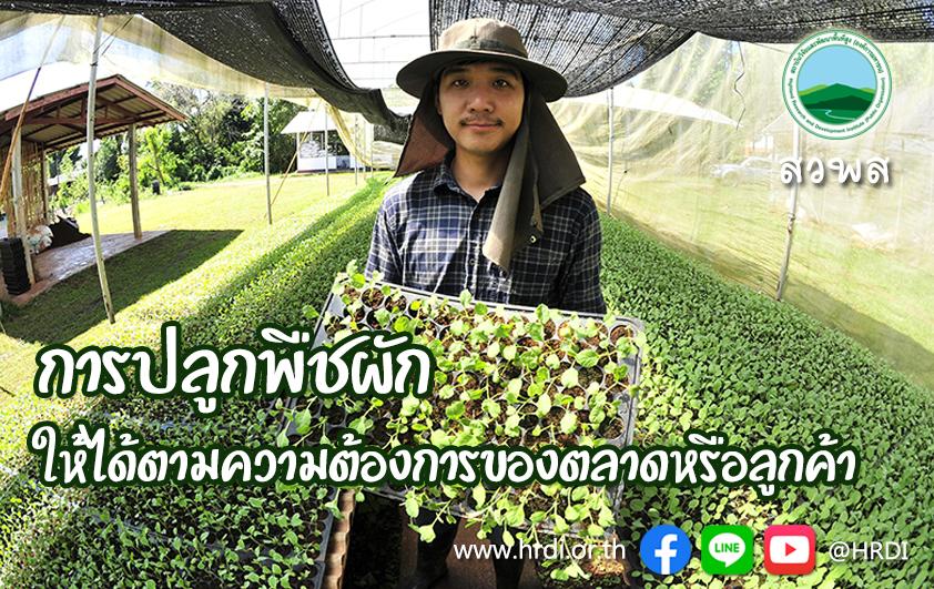 การปลูกพืชผักให้ได้ตามความต้องการของตลาดหรือลูกค้า