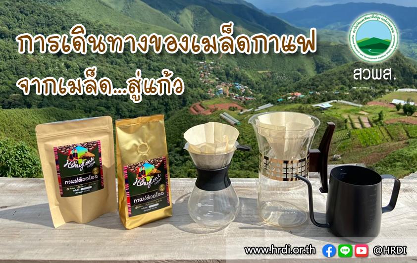 การเดินทางของเมล็ดกาแฟ..จากเมล็ด..สู่แก้ว