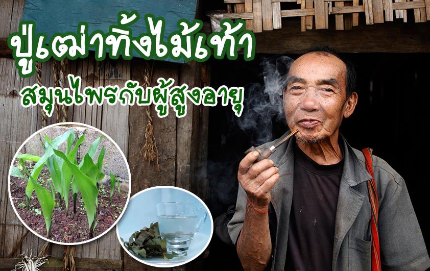 ปู่เฒ่าทิ้งไม้เท้า : สมุนไพรกับผู้สูงอายุ