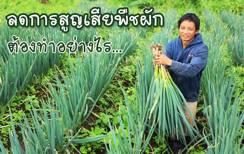 ลดการสูญเสียพืชผัก...ต้องทำอย่างไร